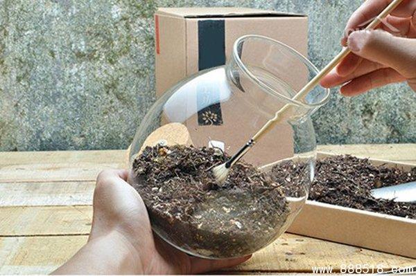 苔藓微景观 手工园艺图片